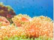 Koh Tao coral