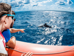 Dolphin_Cruise_(32)