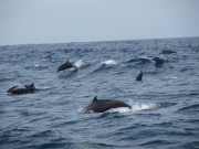 Dolphin_Cruise_(22)