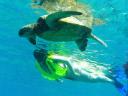 turtleswim