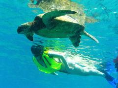 turtleswim