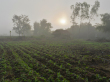 11.Museflower_Retreat&Spa_organic_Vegetable_farm_in_morning_mist