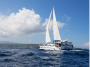 Island Discovery Cruise