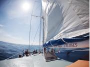Aristocat Island Discovery Cruise (3)