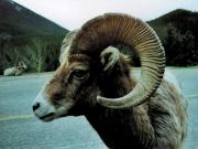 Banff & Wildlife 3