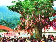 大埔林村許願樹