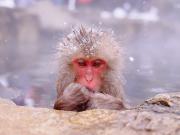 Japan_Nagano_Snow_Monkey_shutterstock_281561387