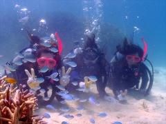 幻の島&体験ダイビング (21)
