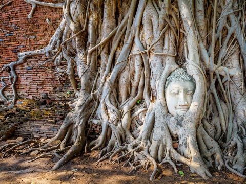 Wat_Mahathat_Head_of_Buddha_shutterstock_628887323
