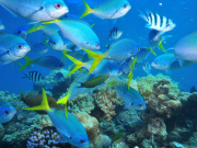 gi-tour-green-island-marinelife-04
