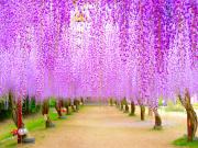 Wisteria_Flower_Arch_shutterstock_644038549
