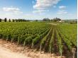 France_Bordeaux_Saint_Emilion_Vineyards_shutterstock_245703841