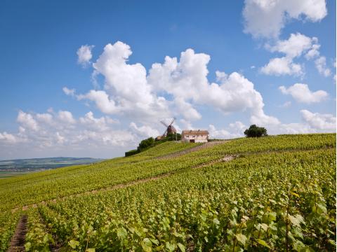 France_Champagne_Reims_Vineyards_shutterstock_201336512
