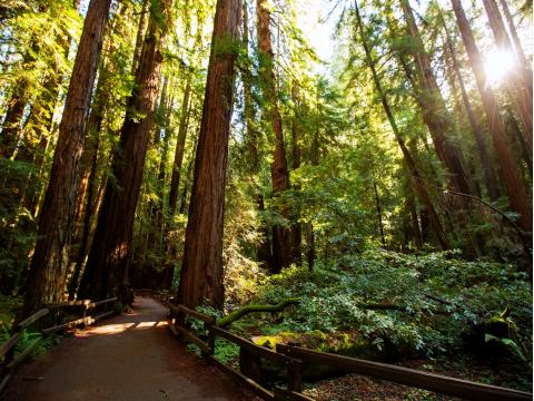 USA_California_Muir Woods_National_Monument_shutterstock_682970605