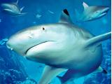 SEA LIFE London Aquarium (3)