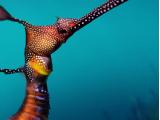 SEA LIFE London Aquarium (4)
