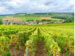 France_Montagne-de-Reims_Champagne-Vineyards_shutterstock_499273894