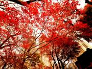 autumnal-leaves-2380617_1280