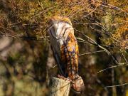 Spain_Seville_Donana-National-Park_shutterstock_545690935