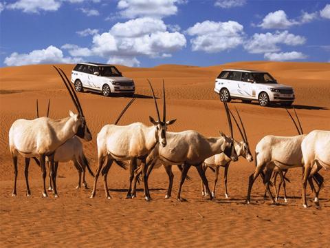 Dubai-Wildlife-Luxury-Desert-Safari