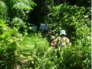 PagatCave06 ジャングルをかき分ける