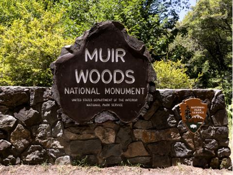 Muir Woods2