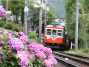 Hakone_Tozan_Train_earysummer(Odakyu)