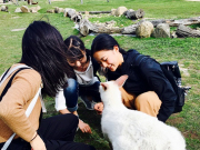 Maru Wildlife Park feeding kangaroos