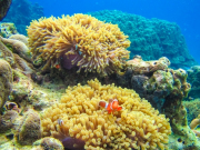 Snorkeling in surin island