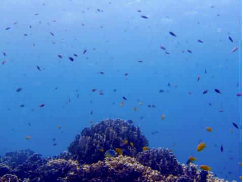 phuket diving6