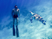 Freediver-with-turtle