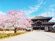 Japan_Nara_Todai-ji_Cherry_blossom_sakura_shutterstock_424460758-1024