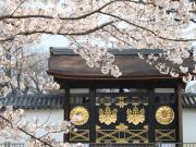 唐門(桜)