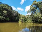 Australia_Cairns_Kuranda_Rainforest_shutterstock_565281505