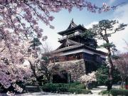 丸岡城③ 桜