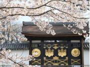 三宝院入口 桜