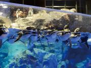 水族館_近くでペンギンを見られます