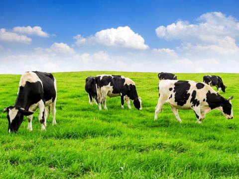 动物农场┃探访可爱动物・享受治愈时光