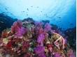 Surin island snorkeling day tour