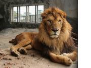 冲绳儿童王国动物园2