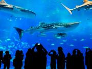 Japan_Okinawa_Churaumi_Aquarium_Silhouettes_shutterstock_365613935