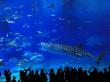 Japan_Okinawa_Churaumi_Aquarium_Silhouettes_shutterstock_386018038