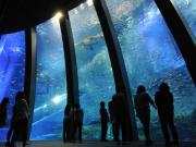 アクアミュージアム:大水槽