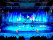 海の動物たちのショー 夜