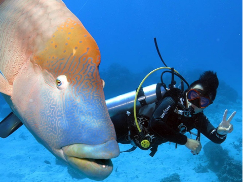 gagi-tour-outer-reef-cairns-09