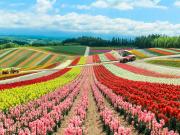 Hokkaido_Biei_Shikisai_no_Oka_Flower_Field