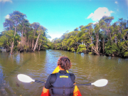 kayaking in okinawa surrounded by mangroves