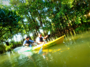 kayaking mangroves okinawa