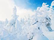 Japan_Miyagi_or_Yamagata_Zao_ice_trees_snow_monsters_shutterstock_1204095382 (1)