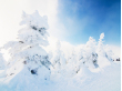 Japan_Miyagi_or_Yamagata_Zao_ice_trees_snow_monsters_shutterstock_1204095382 (2)